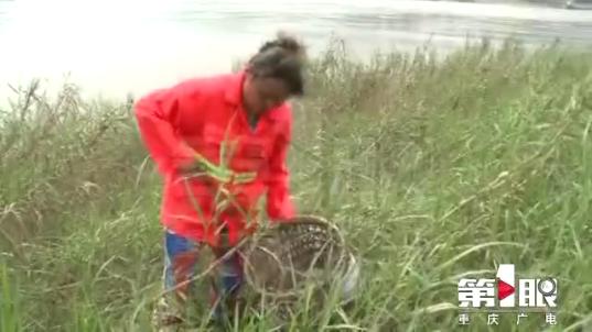 汛期江边垃圾增多  保护母亲河我们在行动